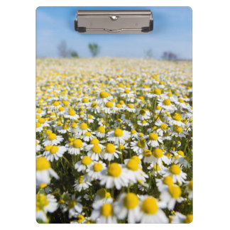 Chamomile Field, Hungary Clipboard