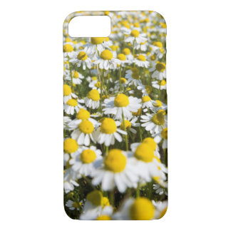 Chamomile Field, Hungary iPhone 8/7 Case
