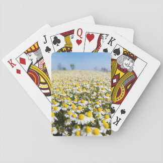 Chamomile Field, Hungary Playing Cards
