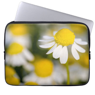 Chamomile flower close-up, Hungary Laptop Computer Sleeves
