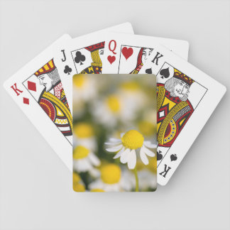 Chamomile flower close-up, Hungary Poker Deck