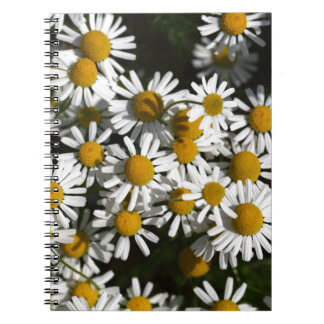 Chamomile flowers spiral note books