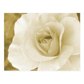 Champagne Rose Postcard