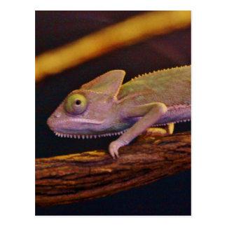 Changing Chameleon Postcard