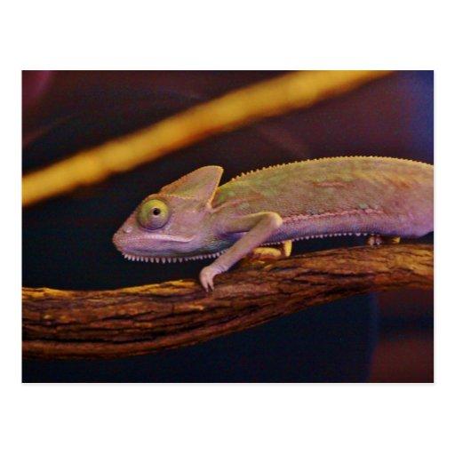 Changing Chameleon Postcards
