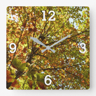 Changing Maple Tree Green and Gold Autumn Square Wall Clock