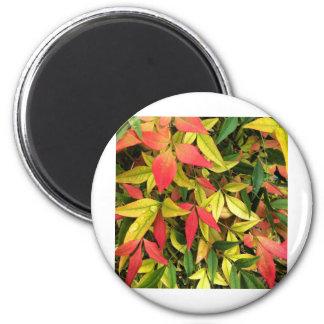 Changing Seasons 6 Cm Round Magnet