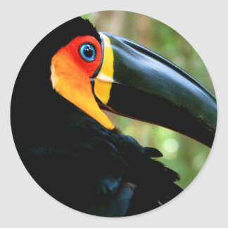 Channel-billed Toucan. Round Sticker