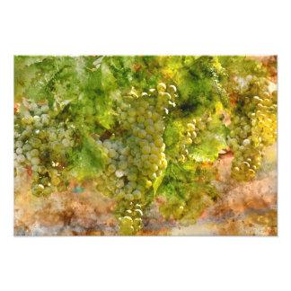 Chardonnay Grapes on the Vine Photo Print