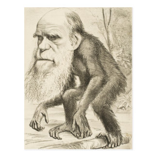 Charles Darwin Original Illustration Postcard