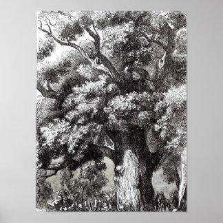 Charles II  Hidden in the Oak Tree Poster