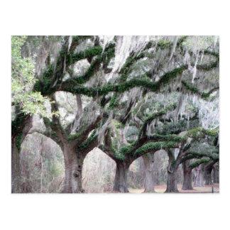 Charleston Oaks Postcard