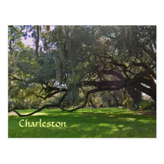 Charleston Plantation Oak Trees Postcard