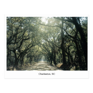 Charleston, SC Oak Trees Postcard