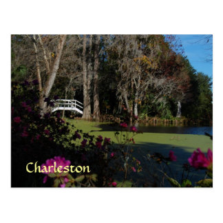 Charleston Swamp Garden Postcard