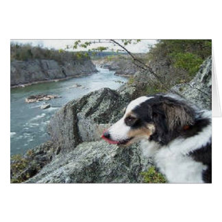 """Charlie at Great Falls""~Border Collie Photo Card"