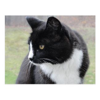 Charlie Cat Postcard