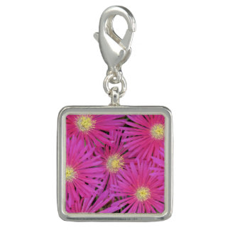 Charm many bright pink yellow centered flowers