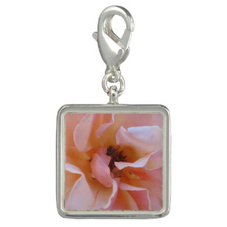 Charm with rose close up beautiful soft petals