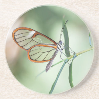 Charming Clear-wing Coaster