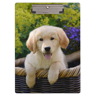 Charming Goldie Retriever Dog Puppy Photo Portrait Clipboard