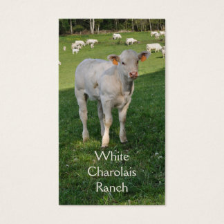 Charolais beef cattle with calf business card