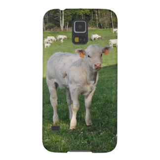 Charolais calf case for galaxy s5