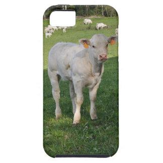 Charolais calf iPhone 5 cases