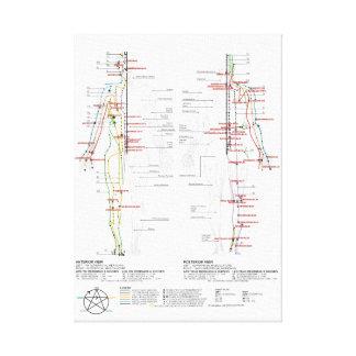 Chart of Human Meridians Canvas Print