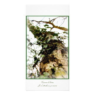 chart photo green tree foams ivy forest wood personalised photo card