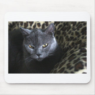 Chartreux  (karthuizer) mouse pad