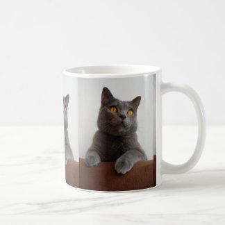 Chartreux peeking coffee mug