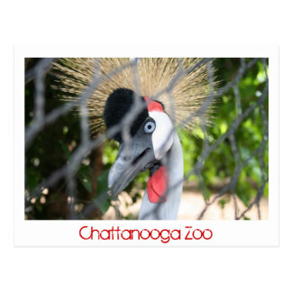Chattanooga Zoo Postcard