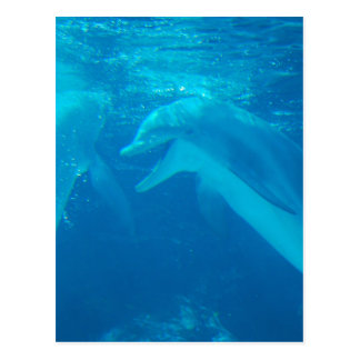 Chatting Dolphin Pair Postcard