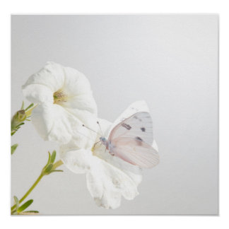 Checkered White butterfly on white Petunias Poster