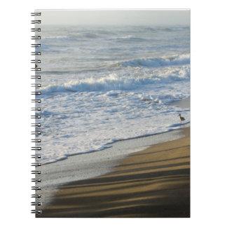 Checking The Shoreline Notebook
