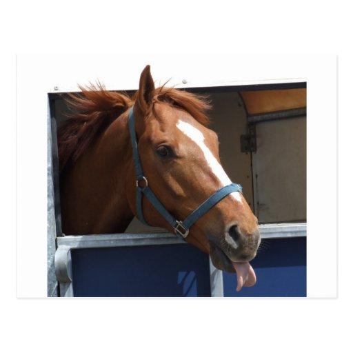 Cheeky Chestnut horse Postcards