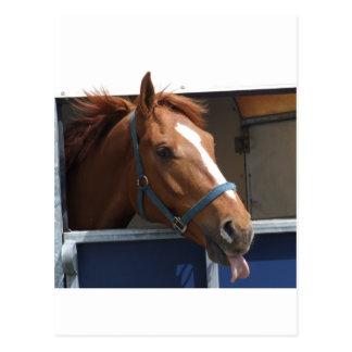 Cheeky Chestnut horse Postcard