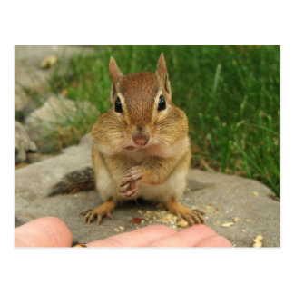 Cheeky Chipmunk Post Cards