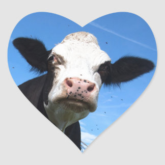 cheeky cow heart stickers