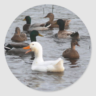 Cheeky Duck Classic Round Sticker