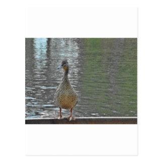 Cheeky Duck Post Card