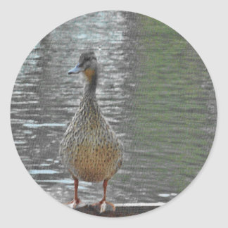Cheeky Duck Round Stickers