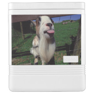 Cheeky Goat Igloo Container Cooler