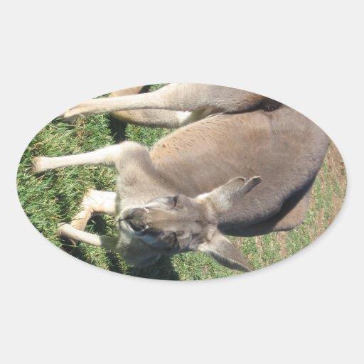 Cheeky Kangaroo - Sticker