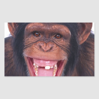 cheeky monkey chimp chimpanzee wild animal rectangular sticker