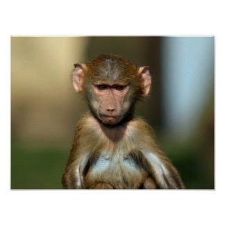 Cheeky Monkey - Cute Baby Baboon Poster / Print