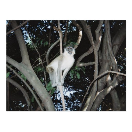 Cheeky Monkey Postcards