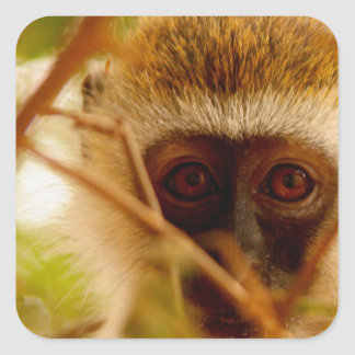 Cheeky Monkey. Square Sticker