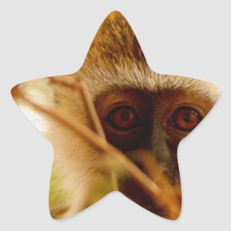 Cheeky Monkey. Star Sticker